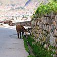 Peru_310