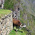 Peru_390