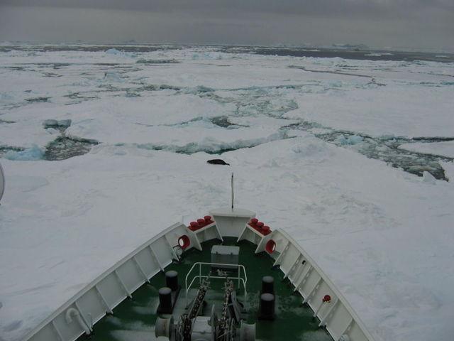 Antarctica_1f