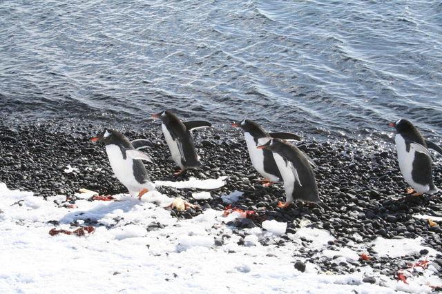 Antarctica_1j